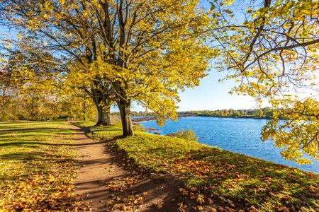 Herbst goldener Park mit Bäumen und Sonnenstrahlen im Herbst an sonnigen Tagen