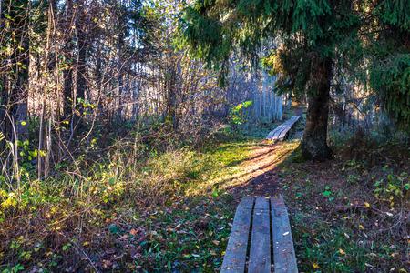 wooden boardwalk in wet forest in sunny day