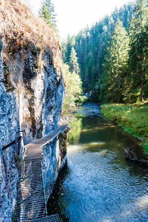 foot bridge over forest river in summer in green foliage