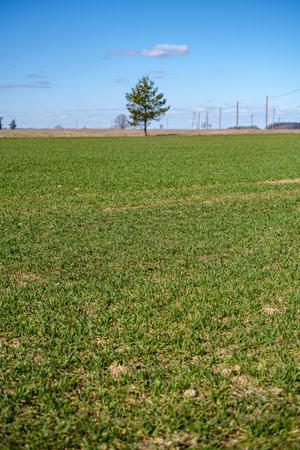 fresh green meadow fieldswith grass pattern in wet summer under blue sky