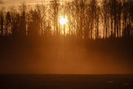 large oak tree in open field in sunset with sun behind it. light mist forming in fields, tree with no leaves