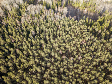 aerial view of countryside endless green forests with small lakes. evergreen spruce tree forest