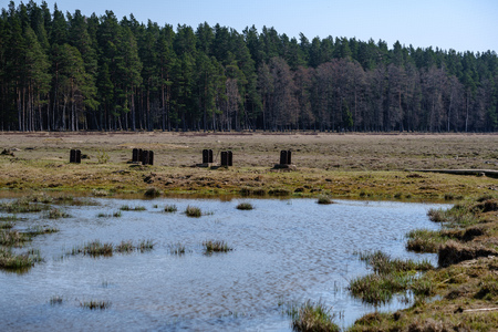 forest lake surrounded by tree trunks and branches with no leaves in early spring countryside