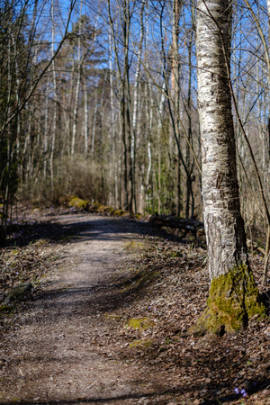 empty gravel dust road in forest with sun rays and shadows. early spring countryside