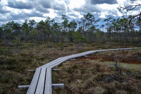 beautiful wooden plank boardwalk footpaths in swamp national park of Kemrei in Latvia. sunny day