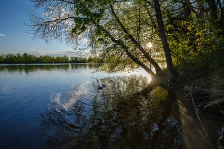 beau coucher de soleil au bord de la rivière sous les feuilles et les branches des arbres. eau calme, ciel bleu avec nuages et reflets dans l'eau. canards nageant le soir