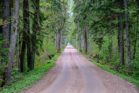 dusty gravel road in country summer time with green foliage on the sides