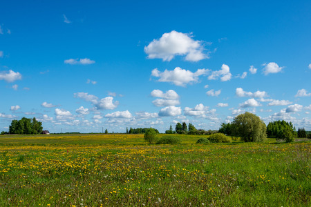 bright green meadow in sunny day in countryside with flowers and blue sky