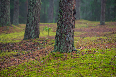 green moss on forestbed in mixed tree forest with tree trunks and green grass in summer. light from sun under the woods Stock Photo