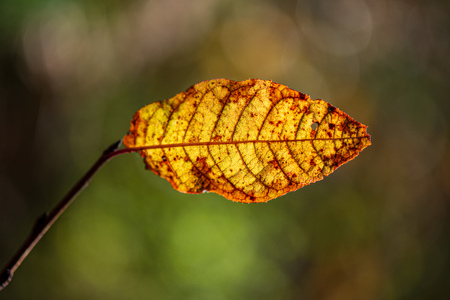 colorful tree leaves in sunny autumn in nature. natural background texture