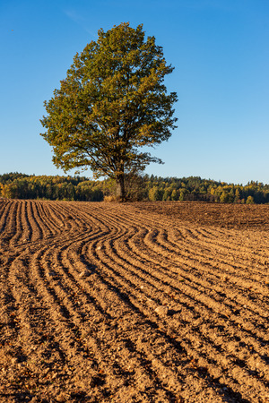 cultivated fields in countryside with dark and wet soil for agriculture. tractor made plotting furrows on the ground