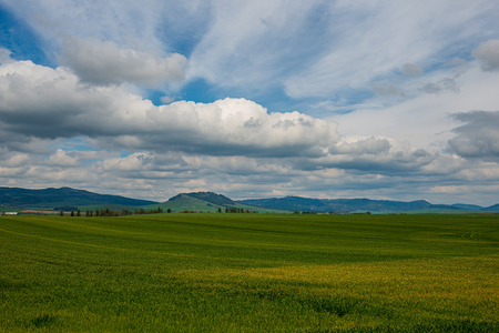 green meadow under blue sky in countryside in summer