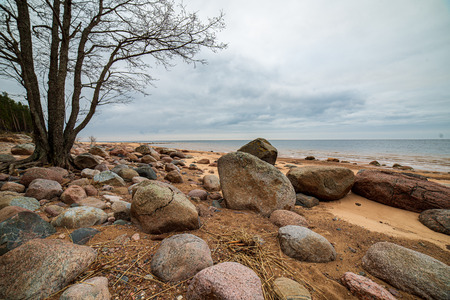 lonely empty sea beach with white sand, large rocks and old wooden trunks on the shore. spring landscape