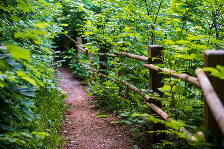 scenic beautiful tourist trail footpath in green forest. rock covered trail 版權商用圖片 - 124889162