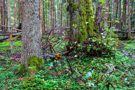 dry old tree trunk stomp in nature, forest scene with foliage and log wood Stock Photo