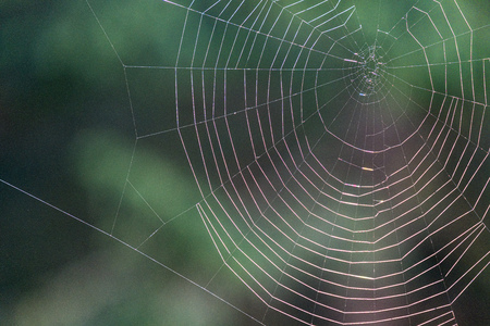natural cobwebs spider web in morning light with dew drops and blur background