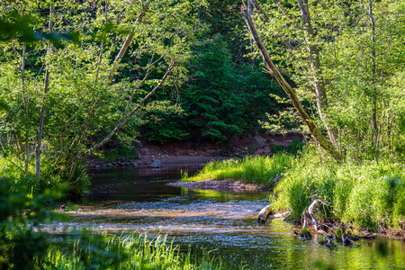 beautiful forest river in latvia in summer. calm water and green foliage