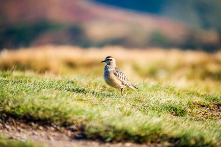small bird in natural environment. feeding in summer