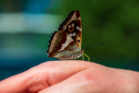 butterfly resting on human hand in summer sun with blur background Banco de Imagens - 124877996