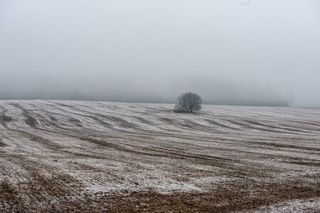 misty fields and meadows with snow in winter evening