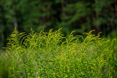 green foliage details with blur background. abstract texture