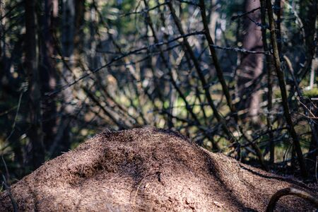 ground soil texture with tree roots and old vegetation leftovers. abstract background Reklamní fotografie