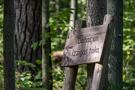 tourist direction signs in forest made of wood planks