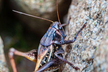 small insect in nature with emvironment details Standard-Bild