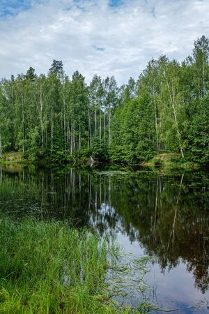 calm summer day evening by the forest lake in forest with blue water and clear sky and green foliage leaves on the trees Banque d'images