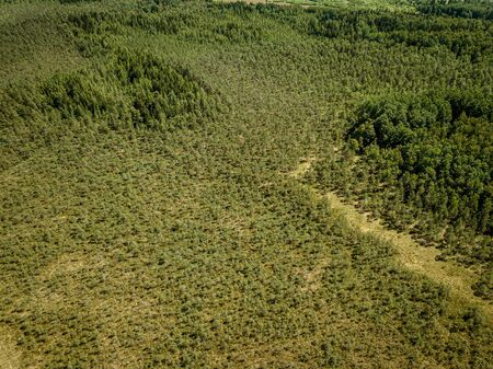 endless green forest from drone aerial image in summer. birds eye view texture Stockfoto