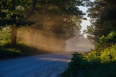 sun rays in summer evening on a country gravel road enclosed with large trees and dust in the air from car passing