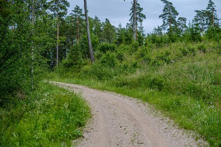 romantic gravel dirt road in countryside in summer green evening enclosed with meadow pastures and forest