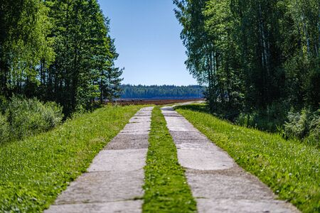 wooden plank footh path boardwalk in green foliage sourroundings in summer country. in perspective