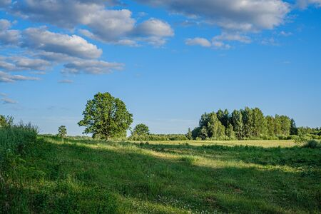natural countryside view in summer evening. Latvia