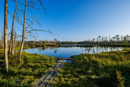 forest lake with blue water in summer day and reflections of old dry trees in green foliage