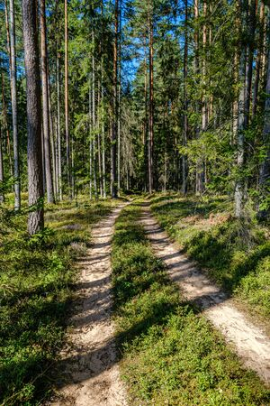 wavy gravel road in green summer forest in perspective. future awaits