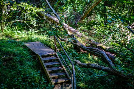 wooden stairs in summer green forest. tourist hiking trail