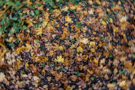autumn pattern. abstract with green tree leaves  in park on the ground.
