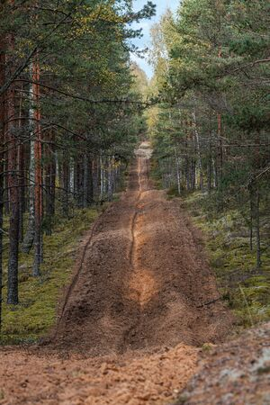 small narrow trail in the woods. passage way in forest sunny day