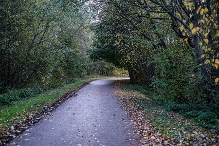 wet asphalt road in autumn forest. narrow perspective