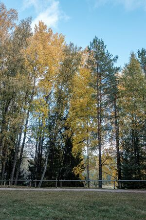 golden yellow colored tree leaves inn the park with black tree trunks and sun shining