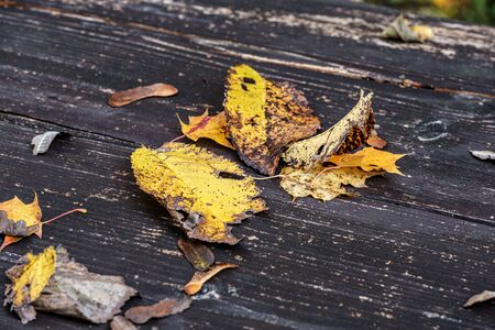 golden autumn leaves on old wooden table. abstract texture