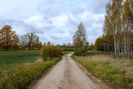 countryside road in autumn with colored trees and sunlight