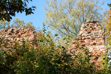 old red brick ruins of ancient castle in autumn colored natue. latvia