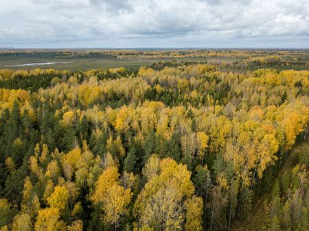 autumn orange and green colored leaf tree forest from above. drone image. aerial texture 版權商用圖片