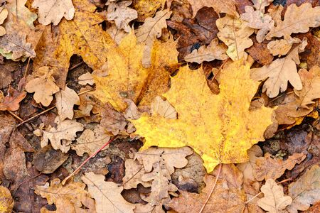 orange autumnal tree leaves on the ground. textured pattern in nature