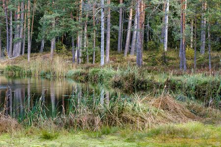 small forest lake in countryside with water reflections in calm water. place for meditation