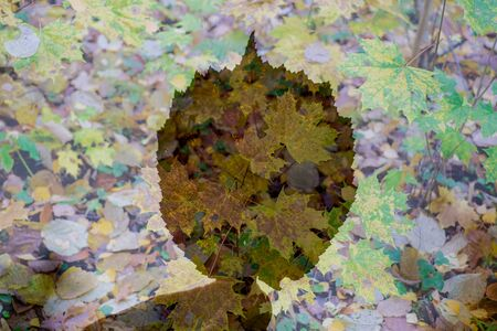 abstract texture from natural materials in wet autumn day foliage background
