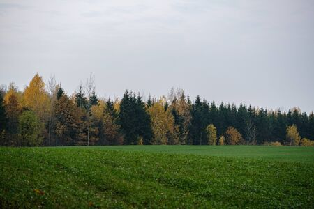 countryside fields and meadows in autumn. scenic view landscape in Latvia country with forest in background