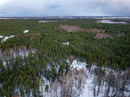 winter forest from above. Drone aerial image of winter trees. textured woods